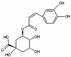 Chlorogenic Acid for Healthy Liver and Gallbladder Function
